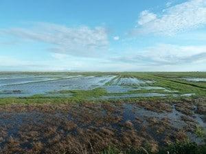 Pré salé inondé par la marée. (RNN Baie Aiguillon)
