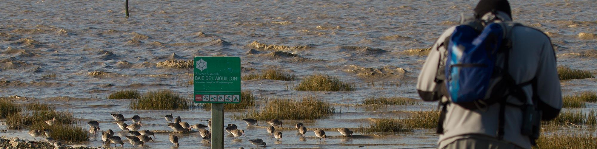 Un garde observe les oiseaux dans la baie de l'Aiguillon