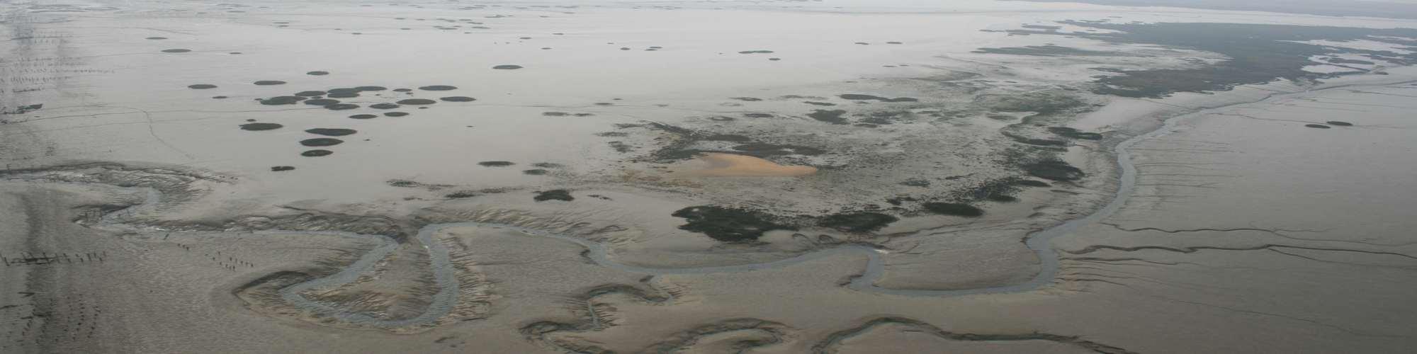 Chenal de marée dans vasière